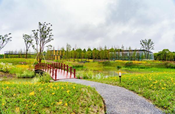 图说:罗泾镇塘湾村母亲花文化园。宝山区供图