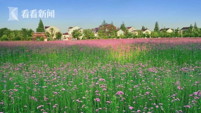 气质乡村:赵家村
