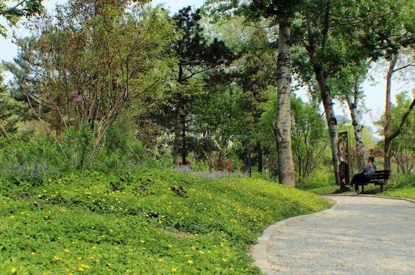 广阳谷是北京市建成的第一片城市森林,与天安门直线距离只有3公里。