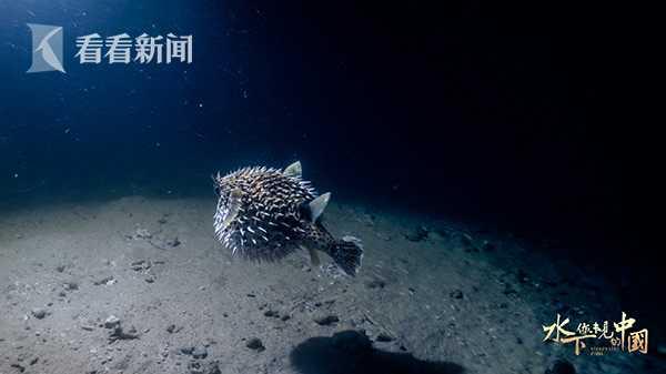 水下·你未见的中国00026.jpg