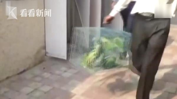 视频 13只鹦鹉被塞鞋盒社员都是朝阳花歌词走私 法官竟传唤它们出庭作证