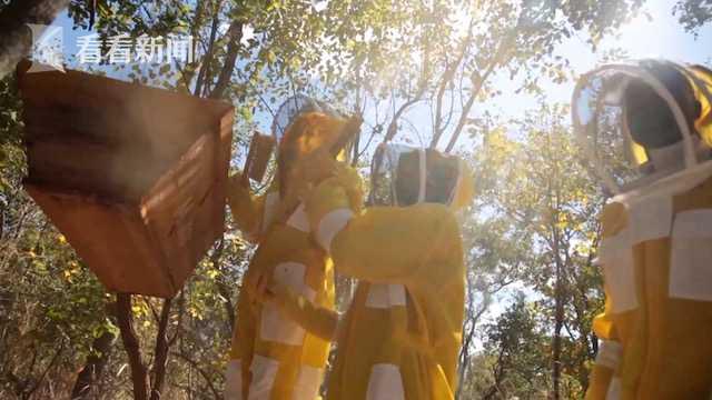 赞比亚蜂蜜1.jpg