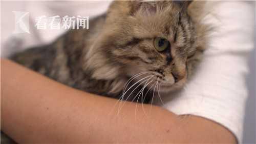 小大蒜的代孕妈妈,一只野猫