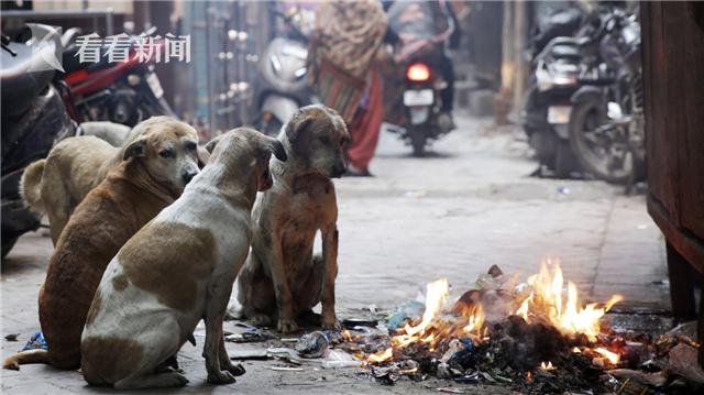 印度黑医院运营多年 流浪狗竟入产房咬死新生儿