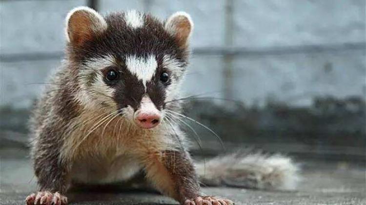 国家林草局:禁止一切形式野生动物交易