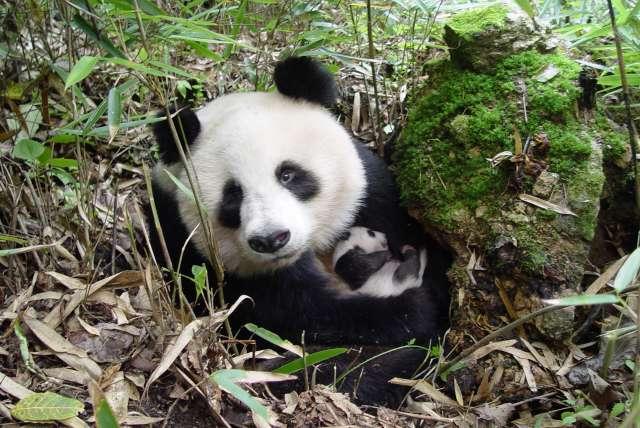 图片来源:WWF