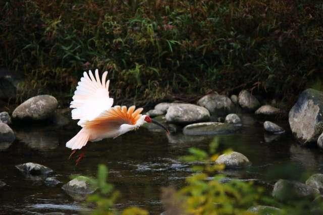图片来源:何天虎/WWF China