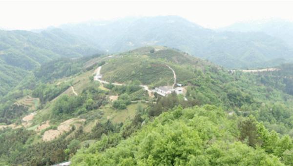 茶园位于黄洋河中游海拔700多米的山坡。(总台央视记者赵振凯、刘海涛、文豪、徐波拍摄)