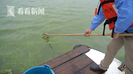 蓝藻,2007年太湖水危机的罪魁祸首