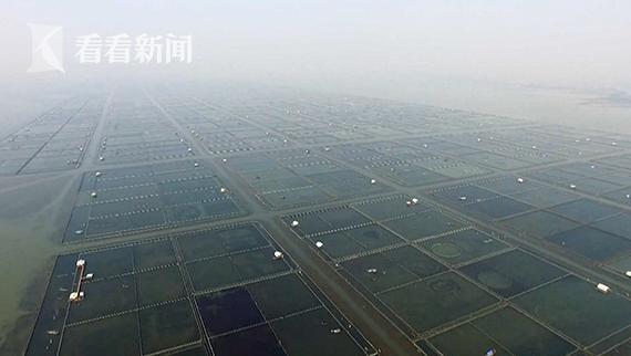 秦雪荣曾经的围网养殖区