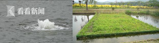曝气装置(左) 生态浮岛(右).png