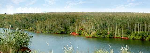 海南澄迈县荒山造林桉树  国家林业和草原局供图