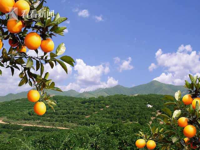 江西省信丰县中国脐橙之乡退耕脐橙林基地  国家林业和草原局供图