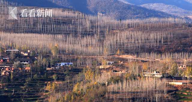 河南新安县 山查村退耕还林杨树林  国家林业和草原局供图