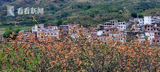 广西恭城县实施退耕还林后种上了月柿  国家林业和草原局供图