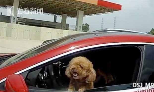 视频|高速上女子超速被拦停 摇下车窗民警吓了一跳