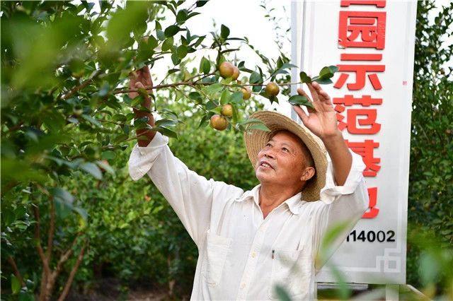 △在信阳市光山县司马光油茶园,务工农民查看油茶果生长状况。