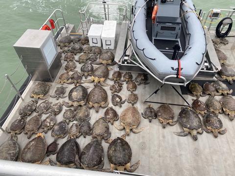 美国得州遭遇极寒天气,大量海龟被冻僵。图源: IC photo