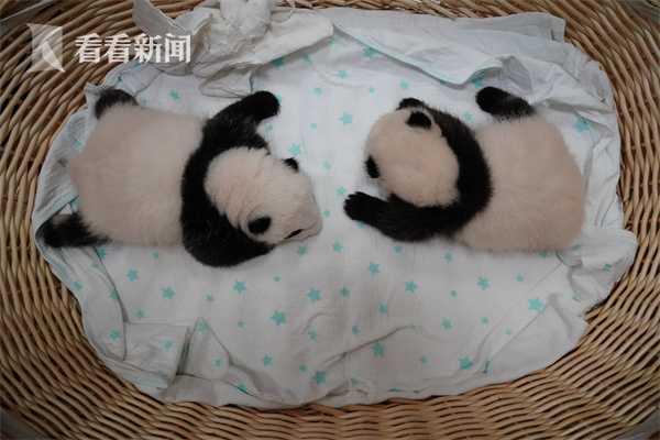 平平双胞胎50天