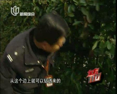 《东方110》20130313:黄昏盗影